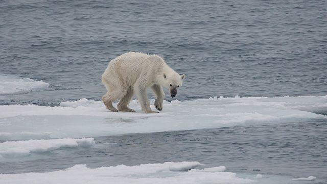 No es simple cantaleta verde. El calentamiento ya es letal.
